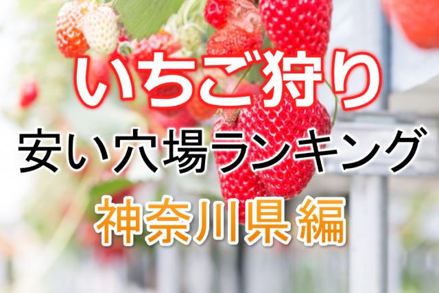 いちご狩り安い神奈川県編