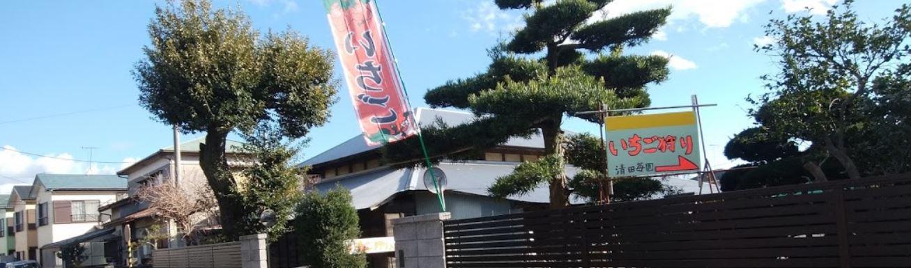 神奈川いちご狩り